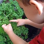 Garden Guide for Tu B'Shevat